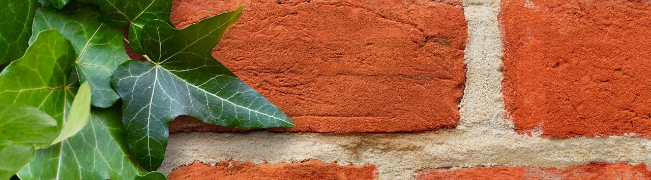 Red brick wall with climbing plant
