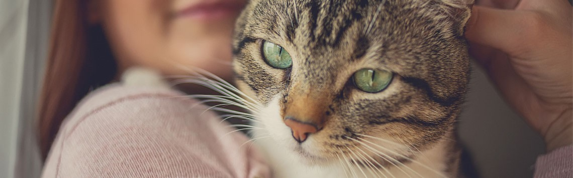 A tabby cat with green eyes being held by a woman