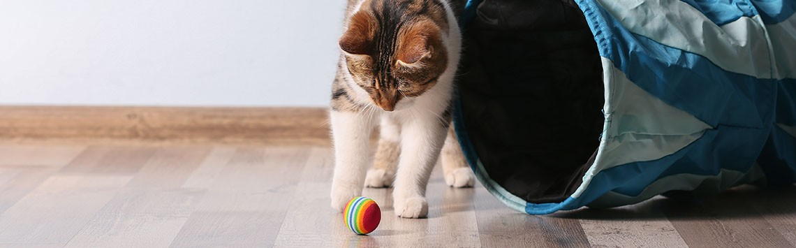 A kitten playing with a multi-coloured ball