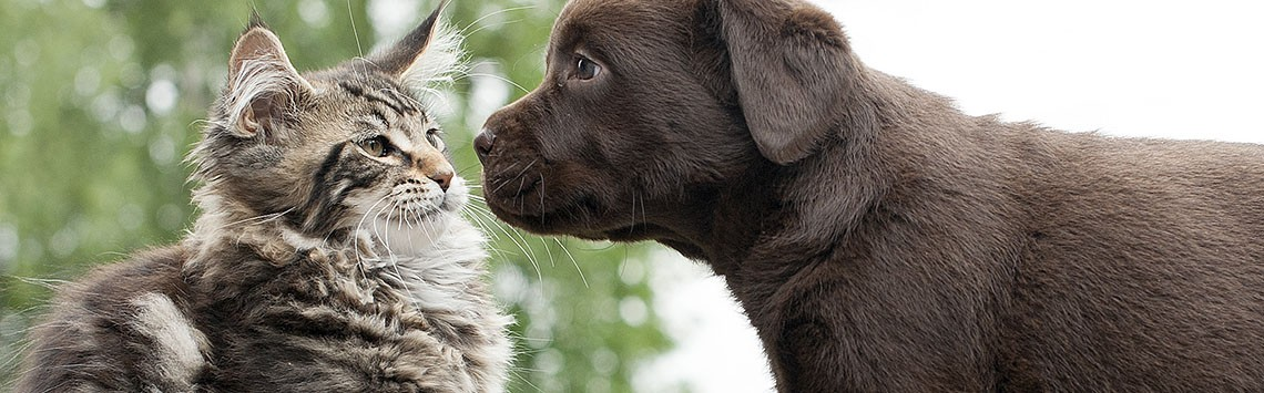 A cat comes face to face with a puppy